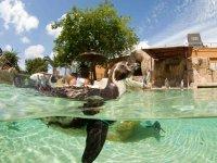 Pinguinos en un habitat adecuado