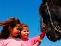 Accarezzare il cavallo
