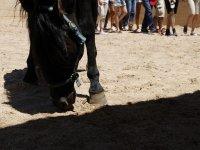 Cavallo sulla nostra pista