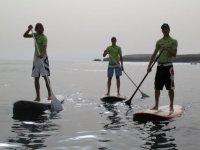 Monitores de paddle surf