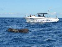 Boat next to the cetacean
