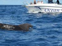 从船上会见鲸类船标志的海景