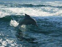 Delfin nadando en el oceano