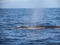 鲸类在它们的自然栖息地