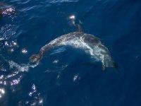 我们看到一只海豚游泳