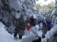 Entre arboles nevados