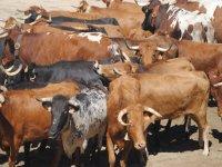 Il nostro bestiame