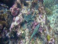 Fondo del mar en la costa del Ameria