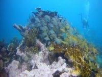 Bucear en el corazon de Cabo de Gata