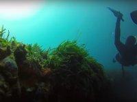 Inmersion en fondos de Almeria