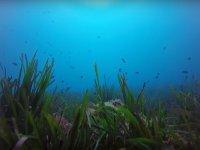 Fondo marino la Restinga