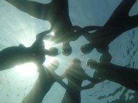 跳水跳水队