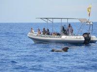 Embarcacion para ver cetaceos