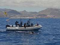 鲸类鲸鱼的Nevegando寻找密切