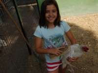 Cepillando a la gallina