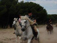 Galopando en caballos blancos