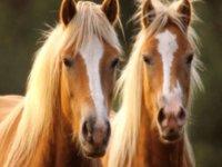 Dos caballos iguales