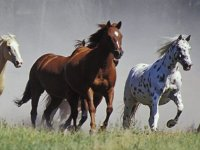 Veloces equinos