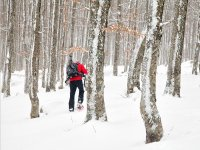 routes through the forest with snowshoes