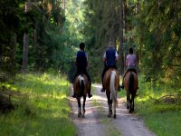 Horseback riding into the forest