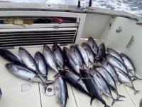 鲔鱼途中Txalupa Turismoa