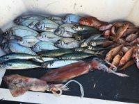 被客户捕获的鱼