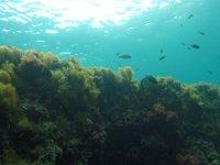 Fondo marino valenciano