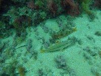 Peces en el Mediterraneo en Valencia