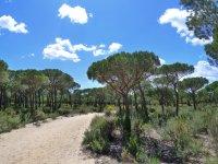 Zona de bosque en Donana
