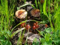 Mycological Route