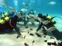 immersioni subacquee Akuyak.JPG