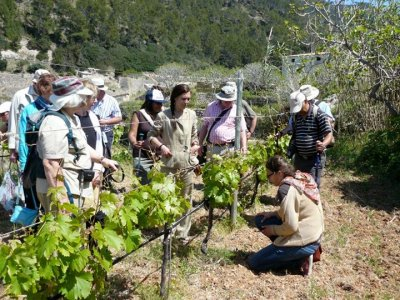 Mallorca Hiking Enoturismo