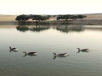 一天钓鱼湖湖