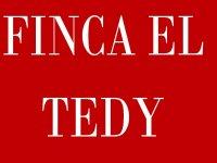 Capeas el Tedy