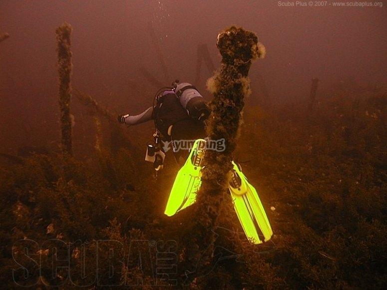 Dives in the Mediterranean