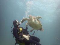 Next to sea turtle