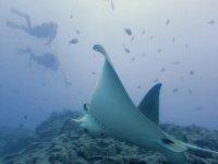 Tenerife underwater fauna