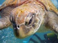 Sea turtle in El Palmar