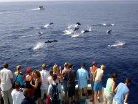 delfines saltan