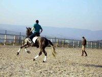 学习驯服马匹