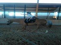 Ejercicios con los caballos