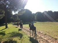 Horse riding tour Doñana Experience - 2 h