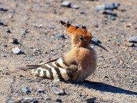 拉里奥哈(La Rioja)的土生鸟