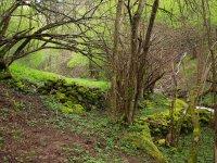 Entorno natural de Ezcaray.