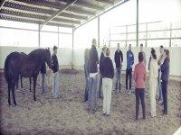 Horse coaching day