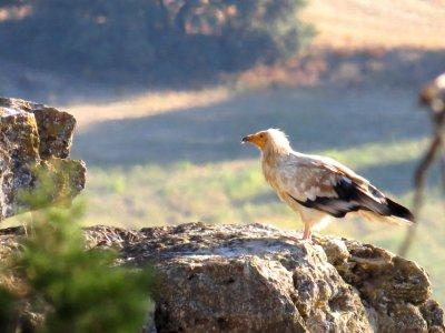 Más que Monte Ornitología