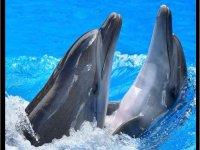 bano con delfines