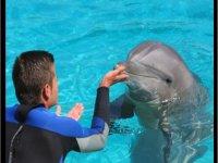 monitor con delfin