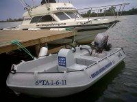 whaly出租和出售鲳鱼