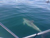 Preciosos delfines